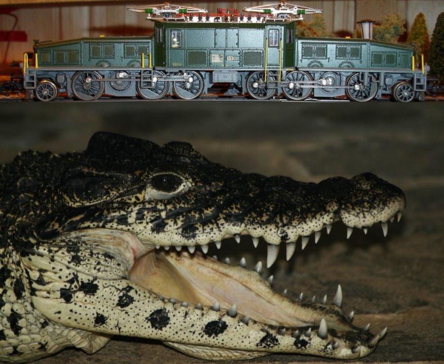 Krokodil_Krokodil-1